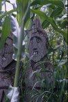 Dans le maïs, tirages numérotés